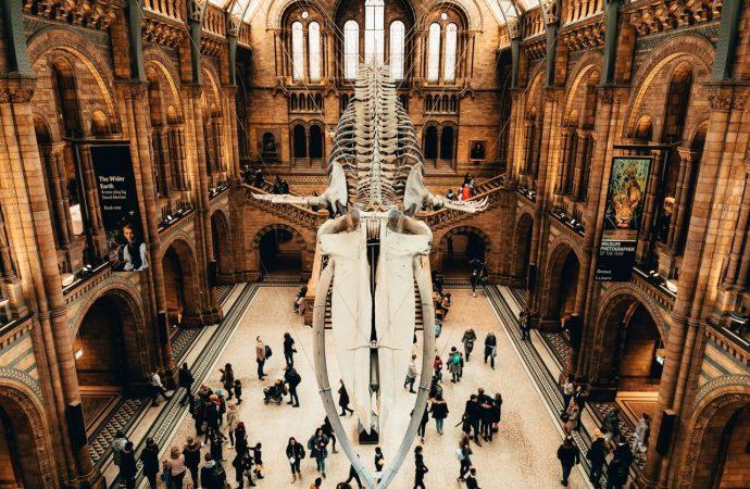 Kultura w Internecie, czyli wirtualny spacer po muzeach i wystawach