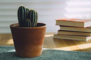 Doniczka z kaktusem i książki